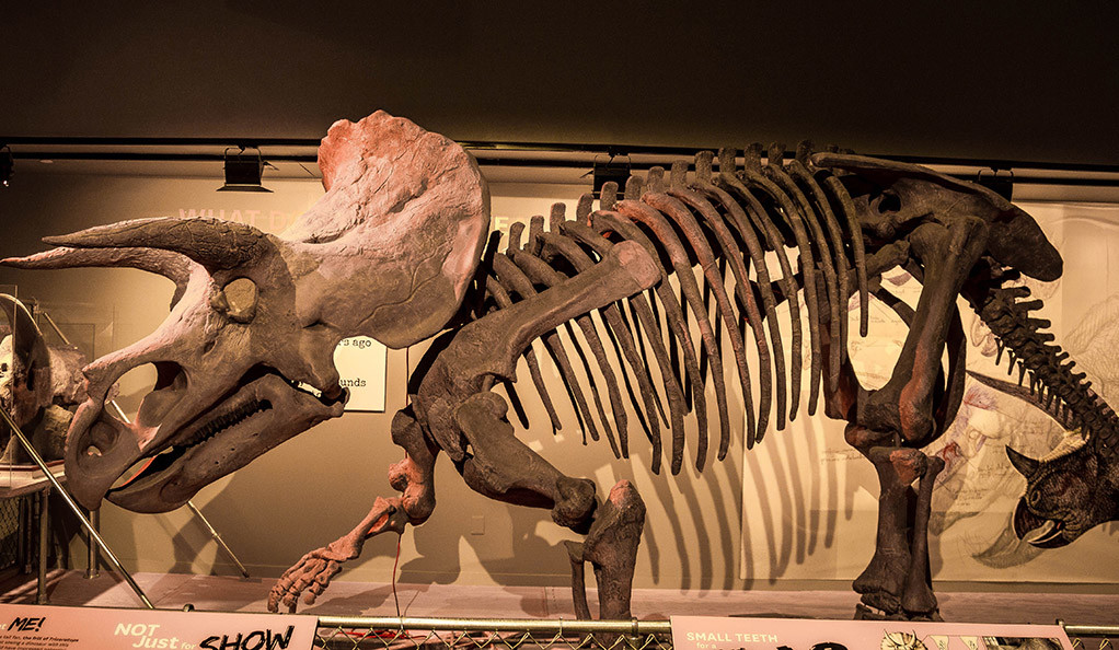 Fossil-Shells-Disclose-Both-Worldwide-Mercury-Pollution-And-Warming-When-Dinosaurs-Became-Extinct